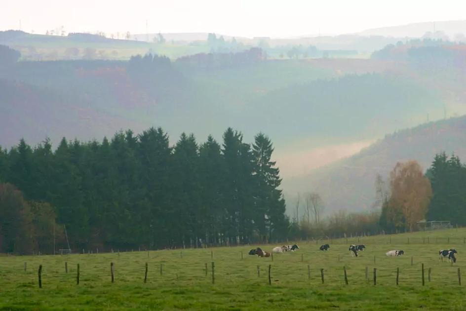 Uitzicht Belgische Ardennen Herberg La Laiterie